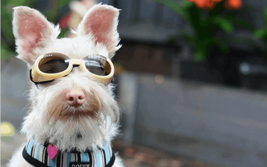 NOTICIA SIMPÁTICA: Gafas para cuidar a quienes amamos
